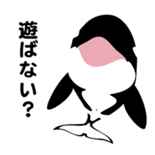 ORCAS ALL OVER!! sticker #622989