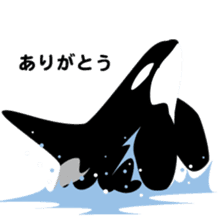 ORCAS ALL OVER!! sticker #622992