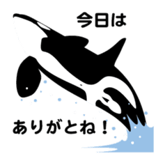 ORCAS ALL OVER!! sticker #622999