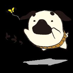 Maro Pug