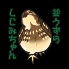 Coturnix japonica SHIJIMI