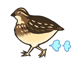 Coturnix japonica SHIJIMI sticker #628802