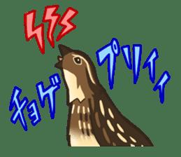 Coturnix japonica SHIJIMI sticker #628804