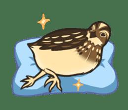 Coturnix japonica SHIJIMI sticker #628805