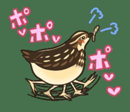 Coturnix japonica SHIJIMI sticker #628808