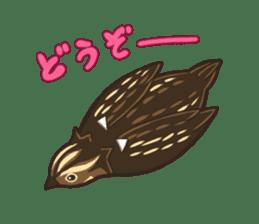Coturnix japonica SHIJIMI sticker #628811