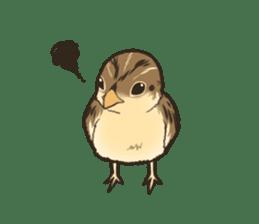 Coturnix japonica SHIJIMI sticker #628813