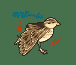 Coturnix japonica SHIJIMI sticker #628814