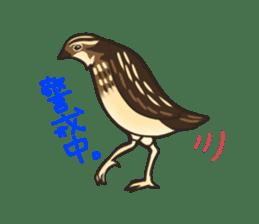 Coturnix japonica SHIJIMI sticker #628816