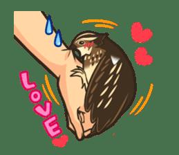 Coturnix japonica SHIJIMI sticker #628818
