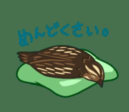 Coturnix japonica SHIJIMI sticker #628822