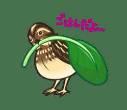 Coturnix japonica SHIJIMI sticker #628823