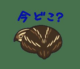 Coturnix japonica SHIJIMI sticker #628824