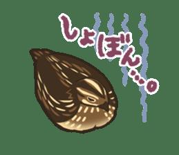 Coturnix japonica SHIJIMI sticker #628825