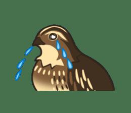 Coturnix japonica SHIJIMI sticker #628826