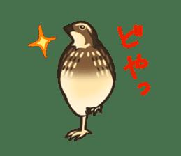 Coturnix japonica SHIJIMI sticker #628827