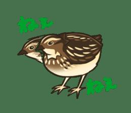 Coturnix japonica SHIJIMI sticker #628828