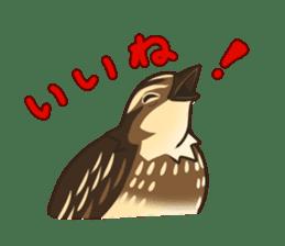 Coturnix japonica SHIJIMI sticker #628829
