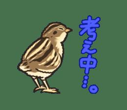 Coturnix japonica SHIJIMI sticker #628830