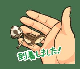 Coturnix japonica SHIJIMI sticker #628831