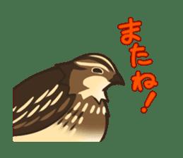 Coturnix japonica SHIJIMI sticker #628832