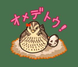 Coturnix japonica SHIJIMI sticker #628833