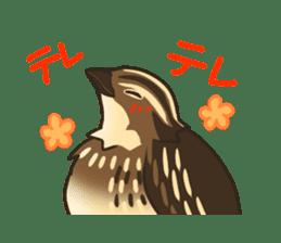 Coturnix japonica SHIJIMI sticker #628834