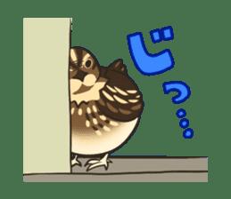 Coturnix japonica SHIJIMI sticker #628835