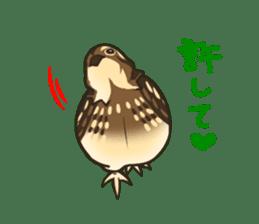Coturnix japonica SHIJIMI sticker #628837
