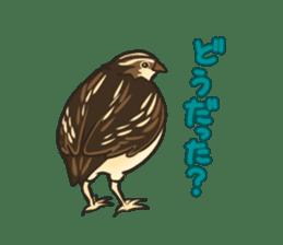 Coturnix japonica SHIJIMI sticker #628838