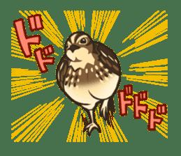 Coturnix japonica SHIJIMI sticker #628841