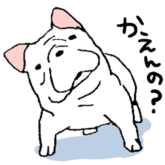 Kotarou is a french bulldog.