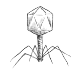 bacteriophage sticker #649505