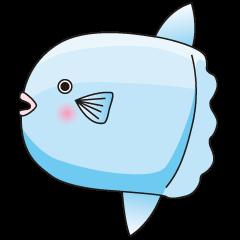 Ocean sunfish Mola