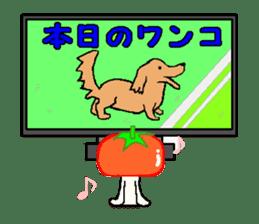 TOMATY of a tomato sticker #700308