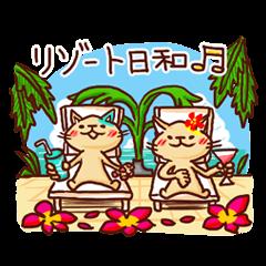 the pad of cat @ hawaii