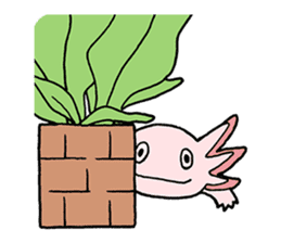 axolotl/Mexico salamandar sticker #718712