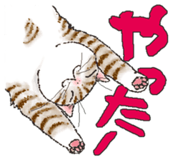 CATS for <Congratulations & Thank you> sticker #722812