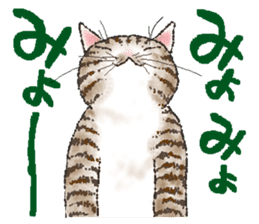 CATS for <Congratulations & Thank you> sticker #722813