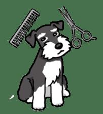 Daily life of Miniature Schnauzer sticker #733474