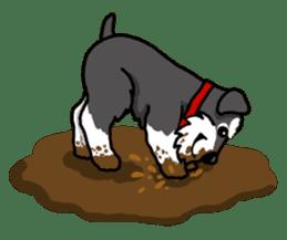 Daily life of Miniature Schnauzer sticker #733475