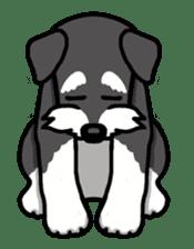 Daily life of Miniature Schnauzer sticker #733479