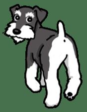 Daily life of Miniature Schnauzer sticker #733481