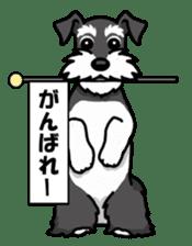 Daily life of Miniature Schnauzer sticker #733483