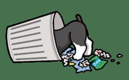 Daily life of Miniature Schnauzer sticker #733487