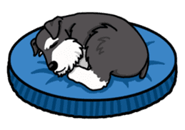 Daily life of Miniature Schnauzer sticker #733488