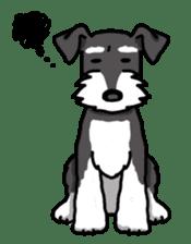 Daily life of Miniature Schnauzer sticker #733491