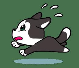Sora, the cute siberian husky sticker #741787