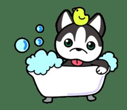 Sora, the cute siberian husky sticker #741795