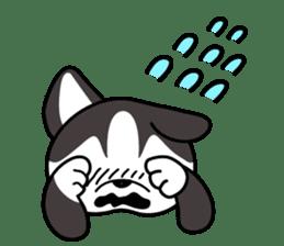Sora, the cute siberian husky sticker #741819